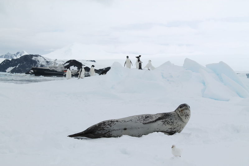 Seals and penguins with Legend in background