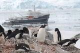Legend and penguins