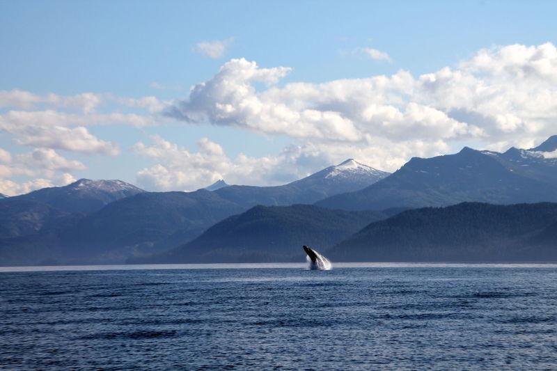 Alaskan sea life