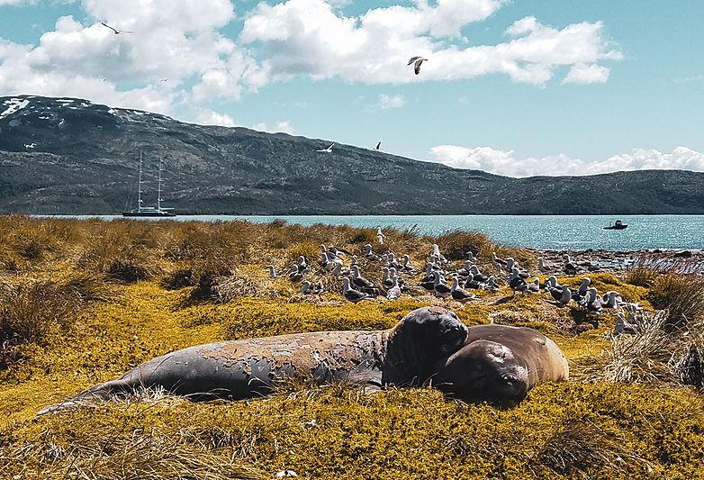 Patagonian wildlife with Aquijo yacht